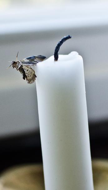 Cool bild macro closeup bug animal mal död ljus stearin ljus