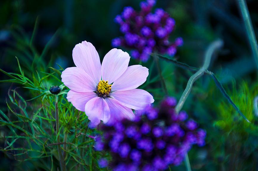 Blomma kungsträdgården