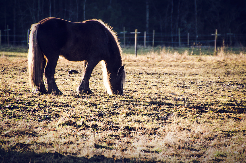 Häst Horse Nationalpark